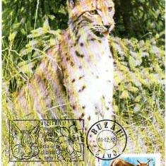 Romania 1988, CM, Fauna Ras, Maxime
