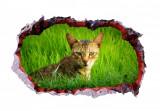 Cumpara ieftin Sticker decorativ, Gaura in perete 3D, Pisica, 85 cm, 408STK