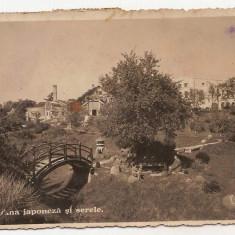 Cluj Napoca Gradina japoneza si serele 1939