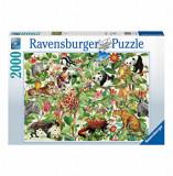 Cumpara ieftin Puzzle Jungla, 2000 piese, Ravensburger