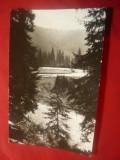 Ilustrata  Valea Sebesului in jos de Oasa Mare   ,circulat 1962, Circulata, Fotografie