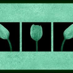 Set tablou fosforescent Lalele albe