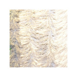 Beteala groasa, alba, 2,4 m