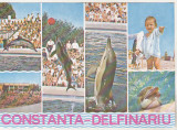 Bnk cp Constanta - Delfinariu - Vedere - necirculata, Printata
