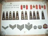 Afis cu Insignele Militare Britanice  de grad-Epoleti ,trese, dim.=70x50 cm