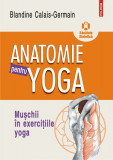 Anatomie pentru yoga