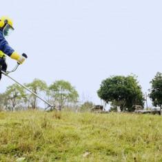 Cositoare iarba