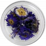 Flori uscate – violet