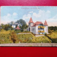 Campina Vila Provinceanu