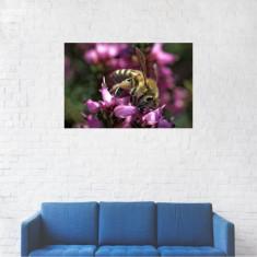Tablou Canvas, Insecta Apis pe flori - 60 x 90 cm