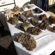 Colectie bogata de flori de mina.