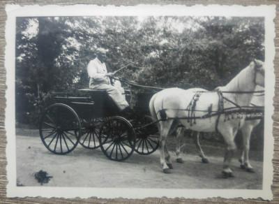 Barbat cu trasura trasa de cai albi/ foto Romania interbelica foto