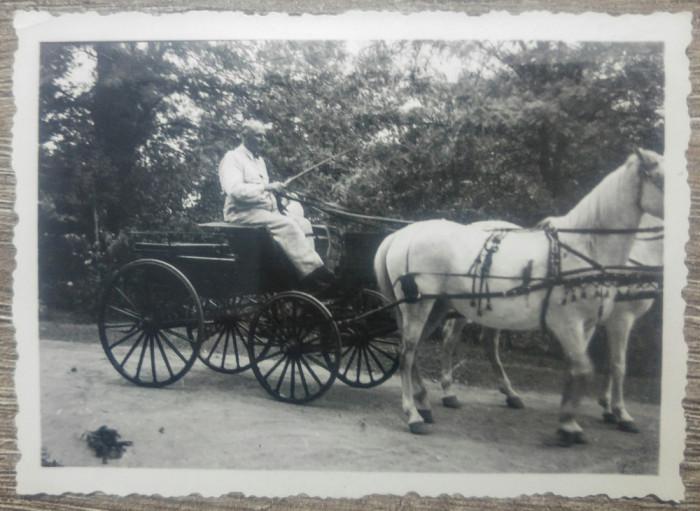 Barbat cu trasura trasa de cai albi/ foto Romania interbelica