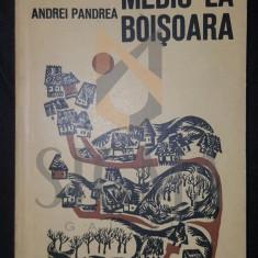 ANDREI PANDREA - MEDIC LA BOISOARA