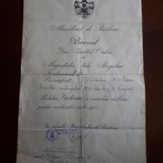 Brevet - Medalia Victoria - 1916 -1921 - Reg. 8 Rosiori