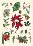 Hartie de impachetat - Christmas Botanical Wrap Decorative Paper | Cavallini Papers & Co. Inc.