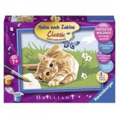 Pictura pe numere pisic si fluture