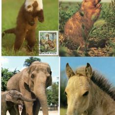 Fauna, Maxime