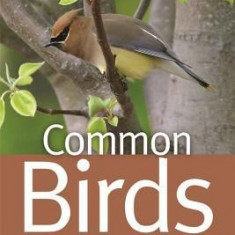 Common Birds of Greater Atlanta