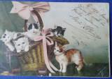 Cos cu pisici, stampile Bârlad si Huși, ultima anul 1901, Circulata, Fotografie, Romania 1900 - 1950
