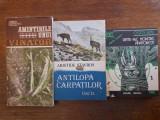 Lot 3 carti despre Vanatoare - Stavros, Ghinescu, Jianu / R3S