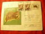 Plic ilustrat - Fauna - Vidra , cod 98/99