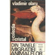 Din tainele migratiei animalelor - Vladimir Olaru