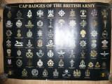 Afis cu Insigne de Sapca Militara ale Armatei Britanice ,dim.= 84x60cm