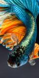 Cumpara ieftin Husa Personalizata ASUS ZenFone Live (L1) ZA550KL Fish