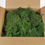 Muschi plati conservati ARTFLORA DYI verde 500g