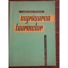INGRASAREA TAURINELOR - I. ANGELESCU