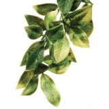 Exo Terra Planta Mandarin Large 70 cm, PT 3022