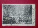 Romania Bucovina Taietori de lemne in Seletin / ed.Leon Konig