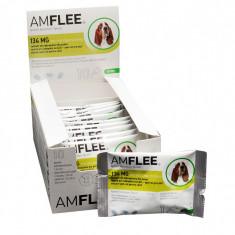 Amflee Spot On M (10-20 kg)