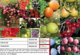 Pomi fructiferi și vița de vie