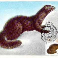 URSS 1980 CM, Fauna Nurca, Maxime