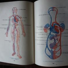 mic atlas de anatomia omului  dem. theodorescu