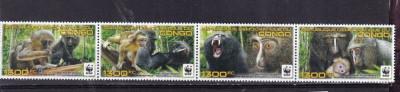 DR CONGO 2012 WWF MAIMUTE foto