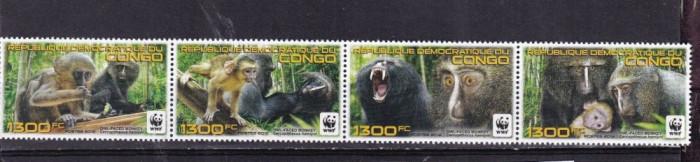 DR CONGO 2012 WWF MAIMUTE