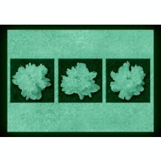 Set tablou fosforescent Bujori albi