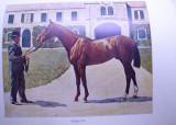 Carte veche 1900 rase caini pisici cai pasari etc bogat ilustrata