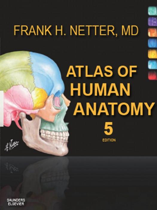 Atlas de anatomie umană în limba engleză în format PDF | ebook