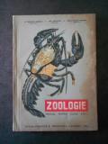 CONSTANTIN BOGOESCU - ZOOLOGIE. MANUAL PENTRU CLASA A IX-A LICEU (1964)