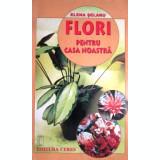 Flori pentru casa noastra