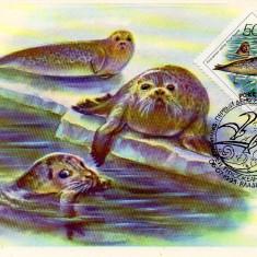 URSS 1993, CM, Fauna Foca, Maxime