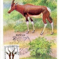 URSS 1984 CM, Fauna, Maxime