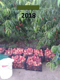 Livada de Pomi Fructiferi cu Locuinta, Teren extravilan