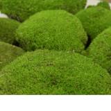 Muschi stabilizat bombat Artflora DYI verde 175gr acoperire 0.1mp
