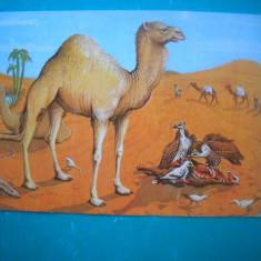 HOPCT 54880  DIORAMA VIATA IN DESERUL SAHARA-MUZEUL ANTIPA BUCURESTI-NECIRCULATA