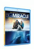 Misiune de salvare / Big Miracle - BLU-RAY Mania Film, universal pictures